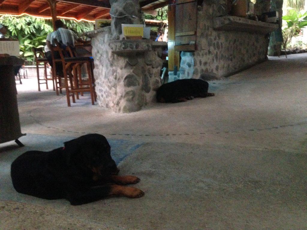 Dogs_La-Ceiba