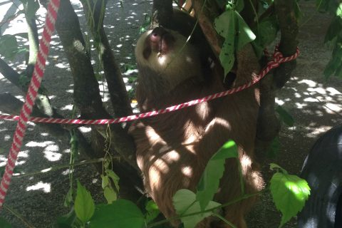 sloth-rescue-centre