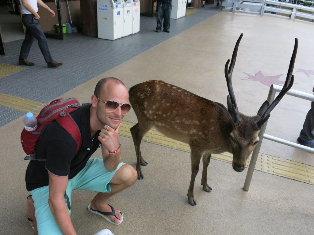 Wild deer in Nara - everywhere!