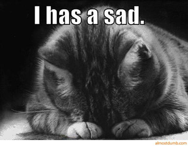 I has a sad - cat