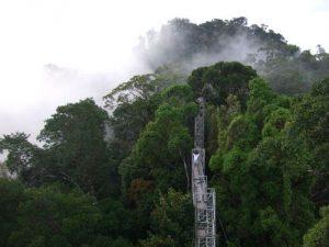 Ulu Temburong National Park