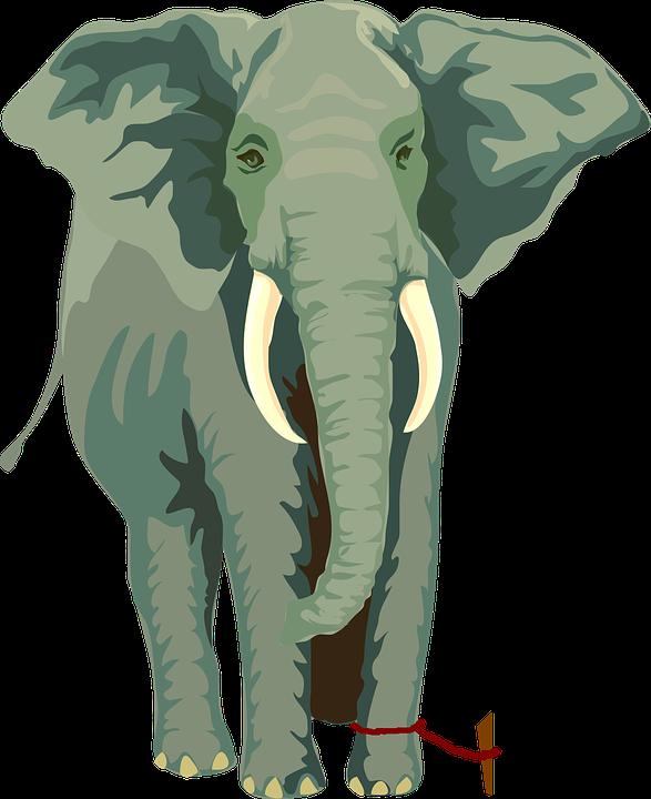elephant-304777_960_720