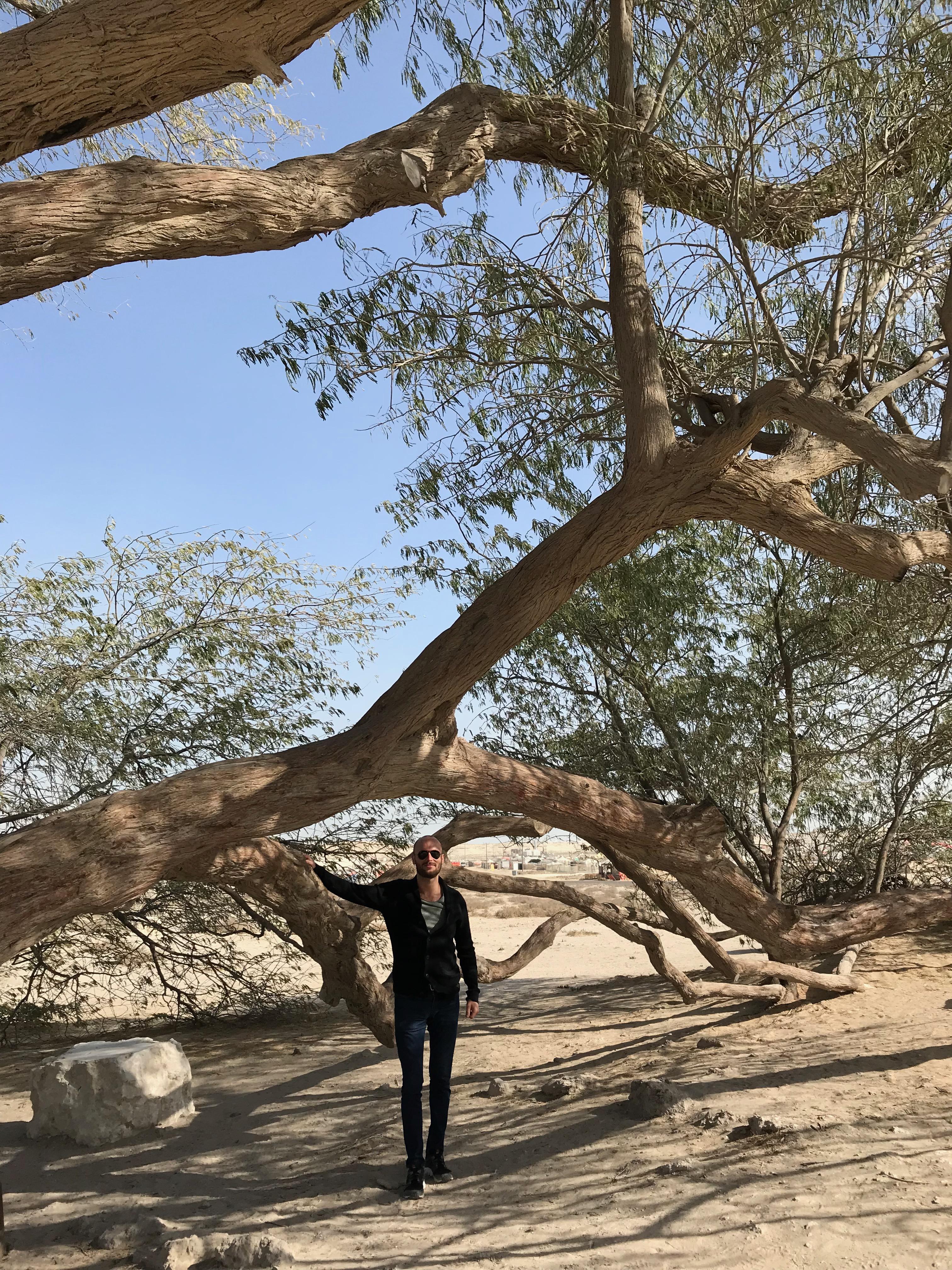 tree of life bahrain 1 1