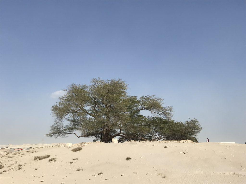 Tree standing alone in the desert.